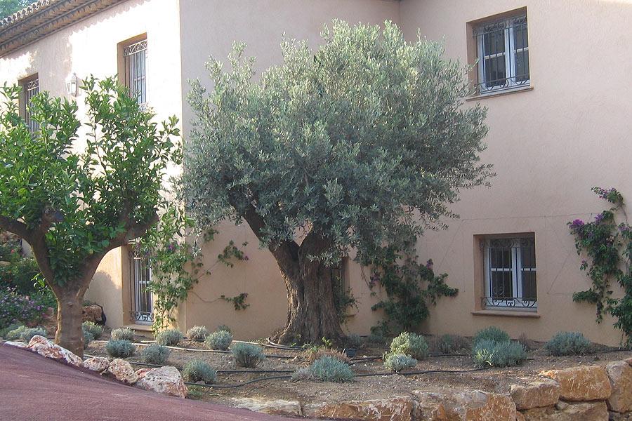 Basso jardins sainte maxime jardinier paysagiste ste for Entretien de jardins