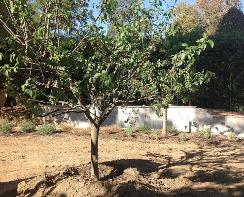 Basso jardins sainte maxime jardinier paysagiste ste for Plantation de jardin