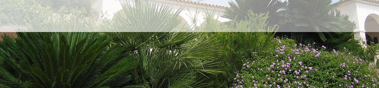 BASSO JARDINS – JARDINIER PAYSAGISTE GOLFE DE SAINT-TROPEZ – VAR 83